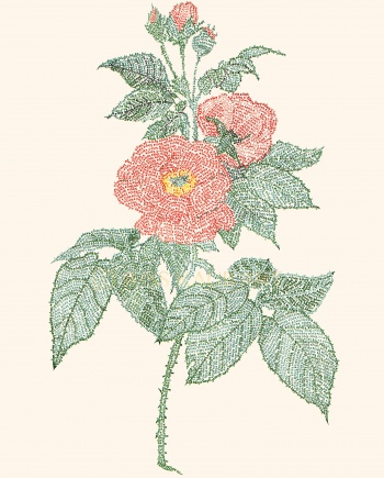 Rose_WM