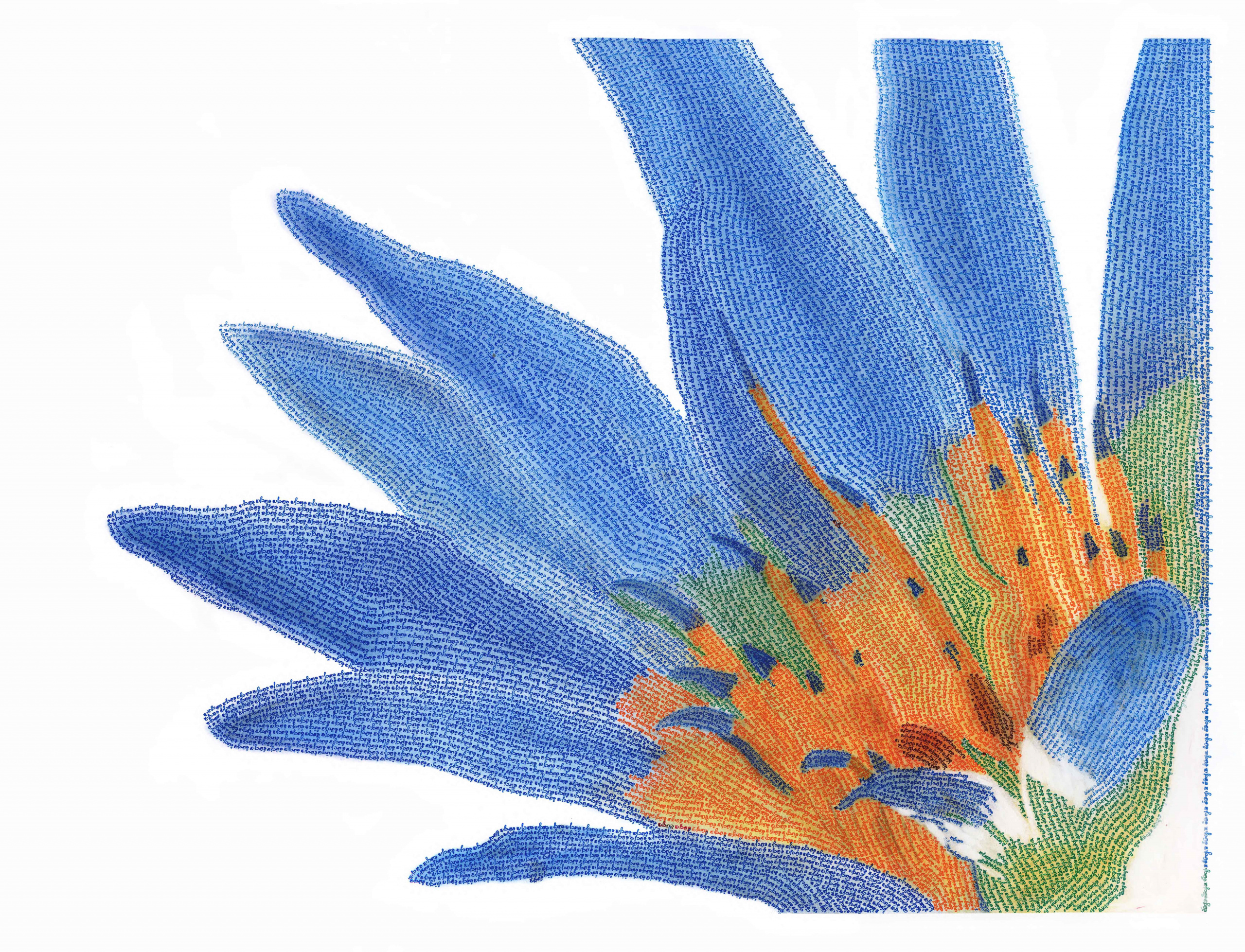 blue water lily with texte111